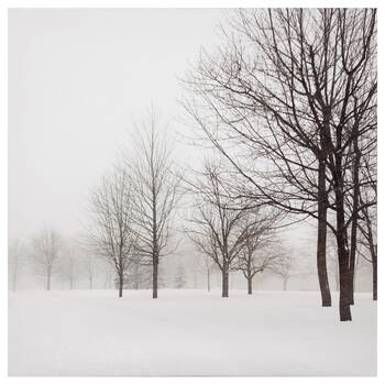 Winter Trees Printed Canvas