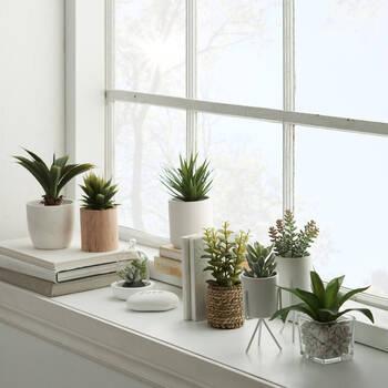 Succulent Plants in Glass Cloche