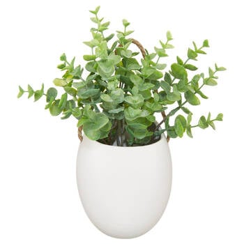 Wall Eucalyptus with Ceramic Pot