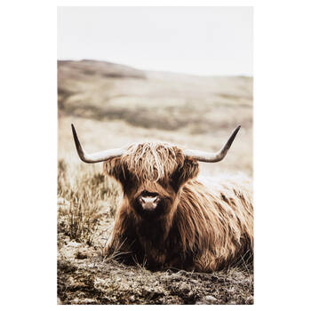 Brown Highland Cow Printed Canvas