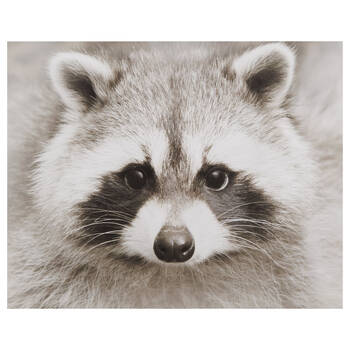 Raccoon Printed Canvas