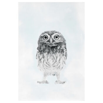 Cute Owl Printed Canvas