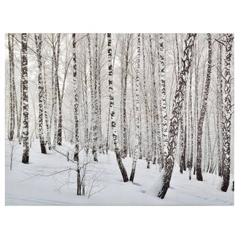 Birch Forest Printed Canvas