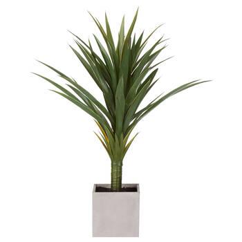 Plante tropicale avec pot en ciment