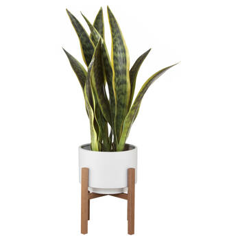 Plant on a Wood Stand