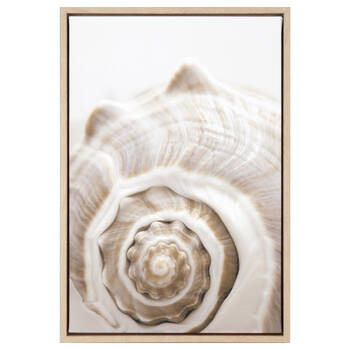 Snail Shell Printed Framed Art