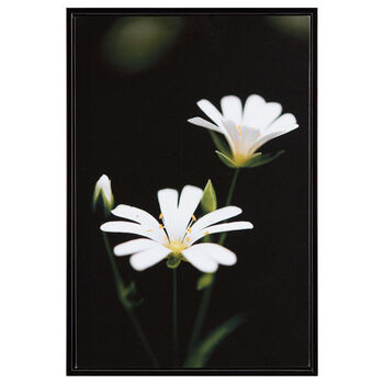 White Petals Printed Framed Art