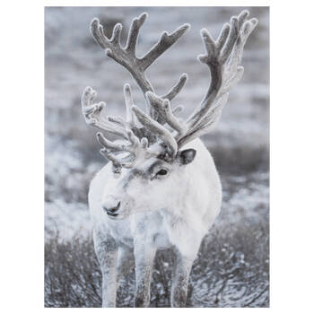 Majestic Reindeer Printed Canvas