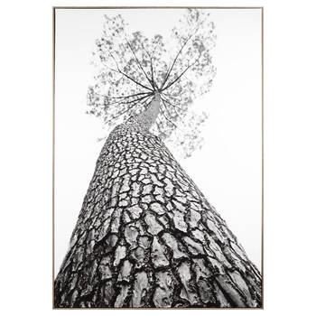 Tall Tree Printed Framed Art