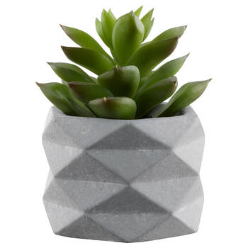 Succulent in Geometric Cement Pot