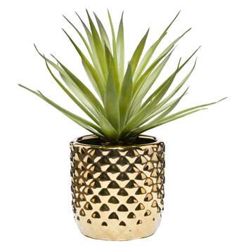 Plante succulente dans un pot céramique dorée