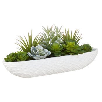 Succulents in Cement Tray