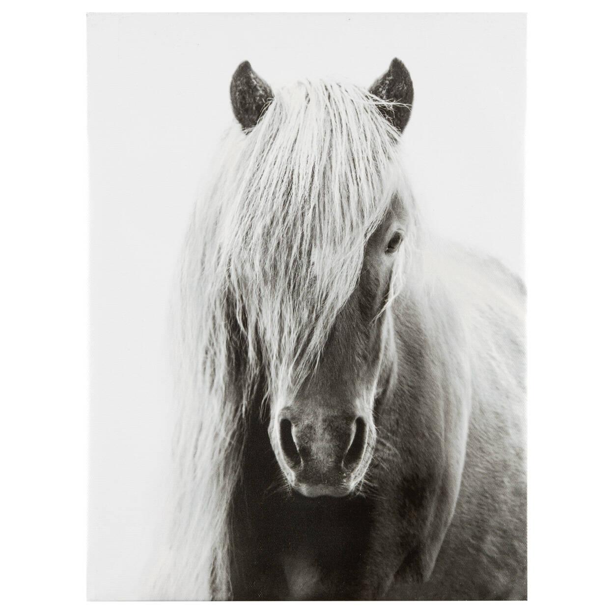Tableau imprimé cheval d'Islande
