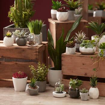 Plante succulente dans pot en ciment à deux tons