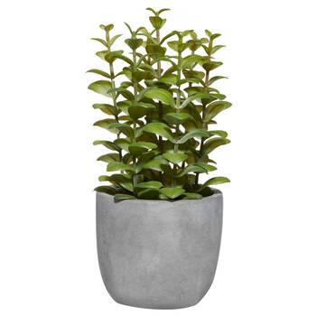 Cement Potted Apple Succulent