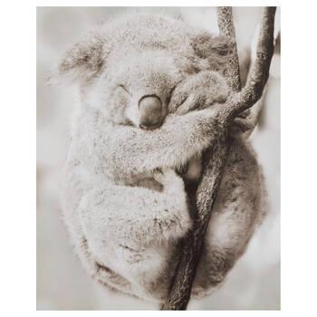 Sleeping Koala Printed Canvas