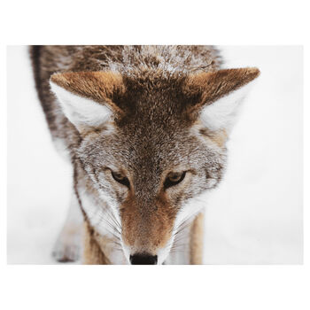 Red Fox Printed Canvas