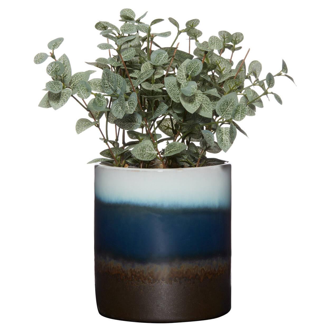 Eucalyptus dans un pot en céramique 3 tons 12 x 25 cm.