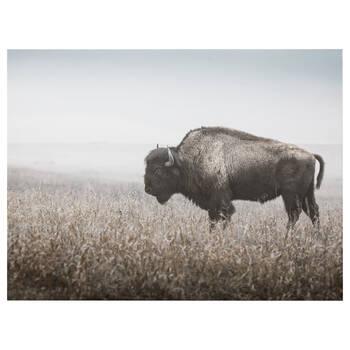 Bison Profile Printed Canvas