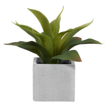 Agave in Cement Pot
