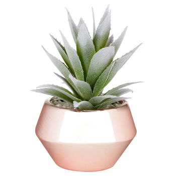 Succulent in Rose Gold Ceramic Pot