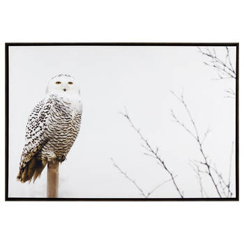 Snow Owl Framed Printed Canvas