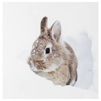 Rabbit in Snow Printed Canvas