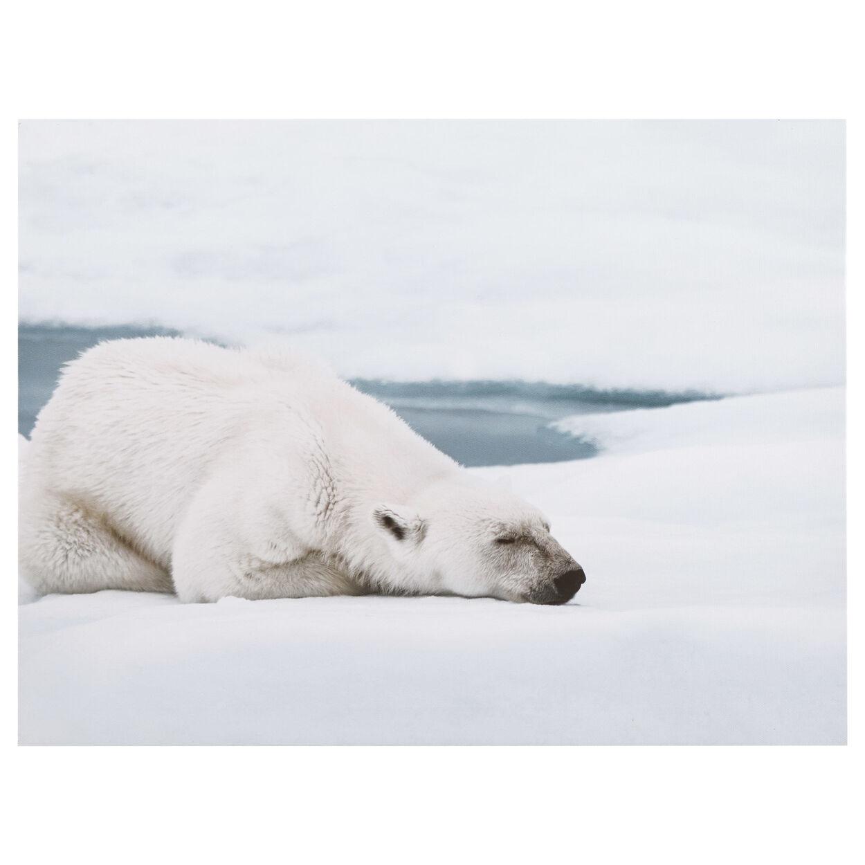 Sleepy Polar Bear Printed Canvas