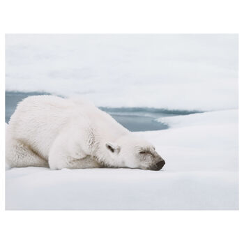 Sleepy Polar Bear Printed Canvas