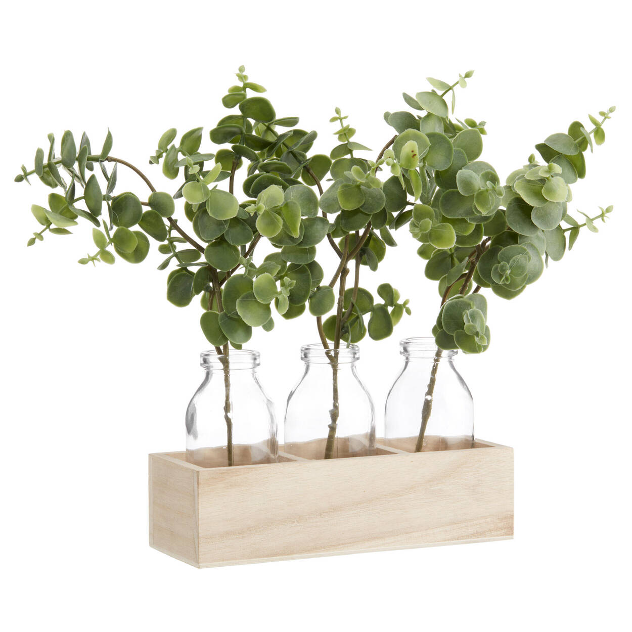 3 Eucalyptus Plants in Natural Wooden Box