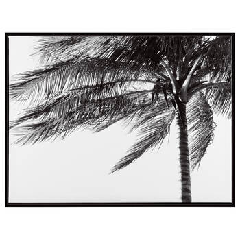 Palm Tree In Motion Framed Art