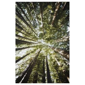 Tall Tree Printed Canvas