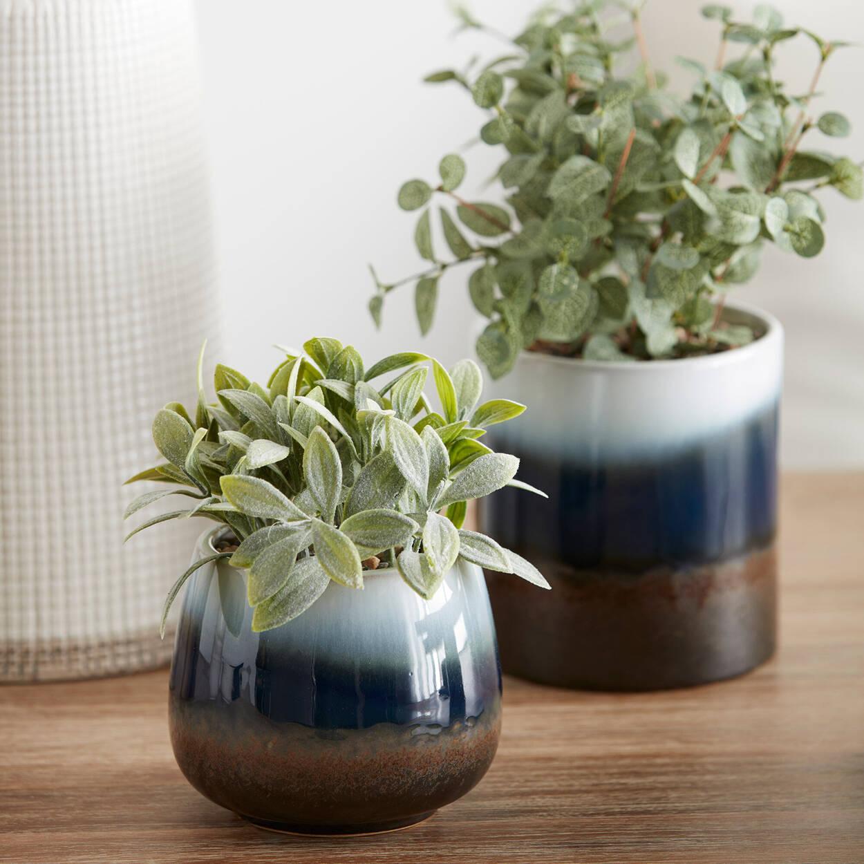 Eucalyptus in Reactive 3-Tone Ceramic Pot 12 x 25 cm.