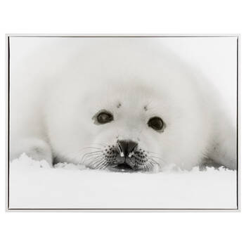 Seal on Snow Framed Art