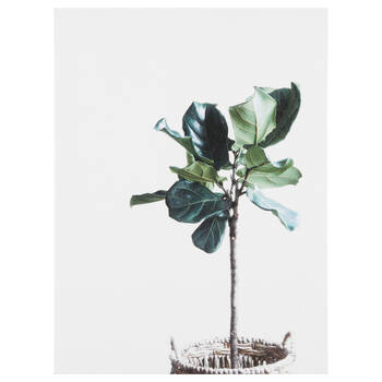 Potted Plant Printed Canvas