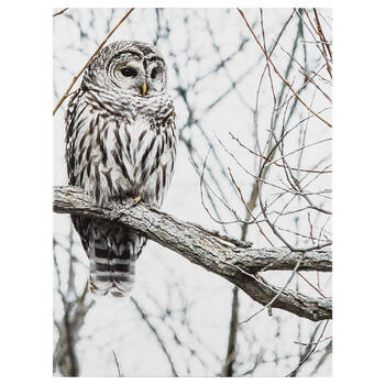 Serene Owl Printed Canvas