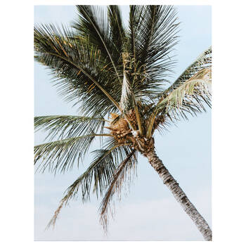 Coconut Tree Printed Canvas