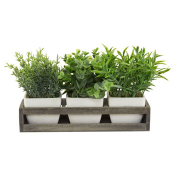 Set of 3 Potted Herbs