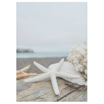 Beach Shell Canvas