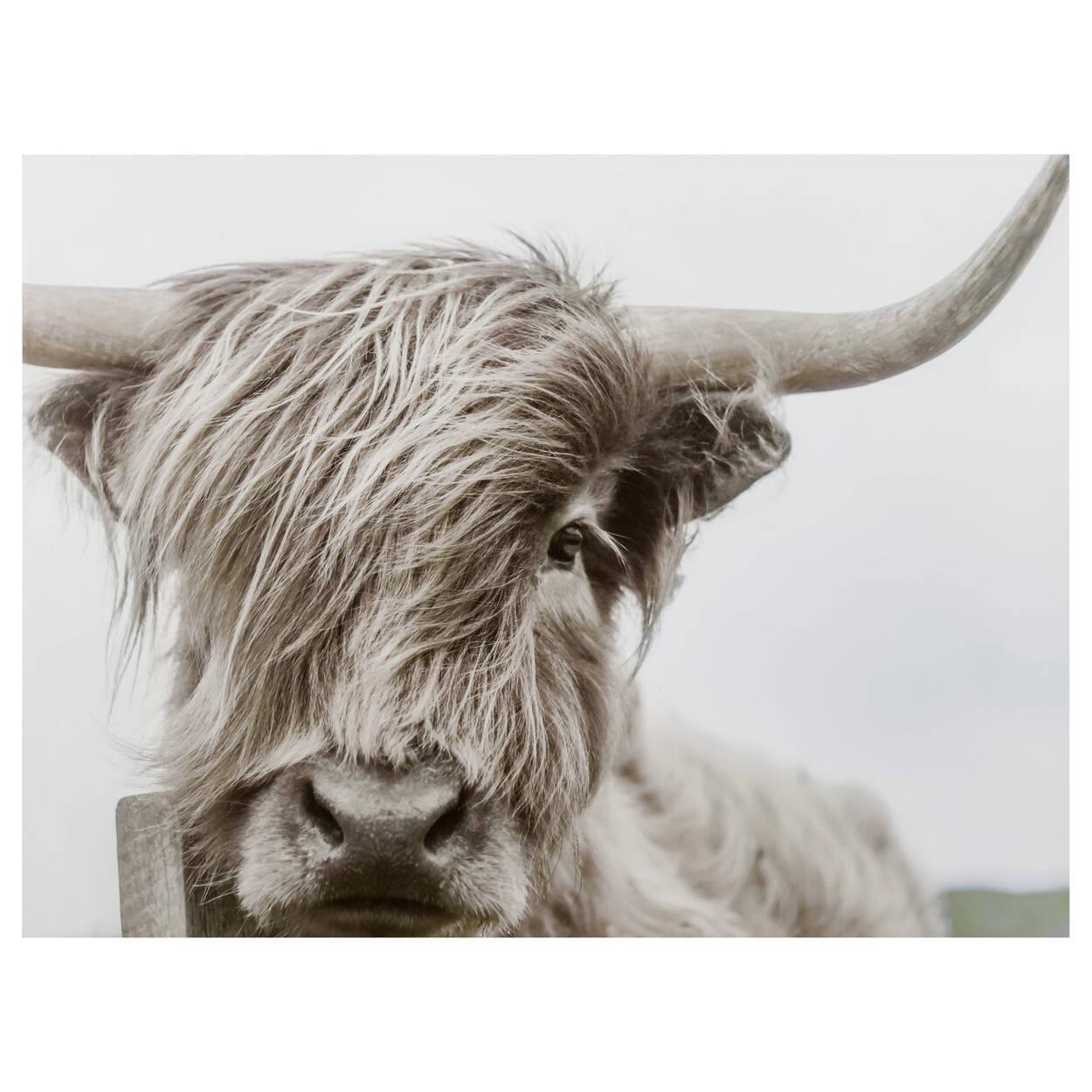 Highland Cow Printed Canvas Bouclair Com
