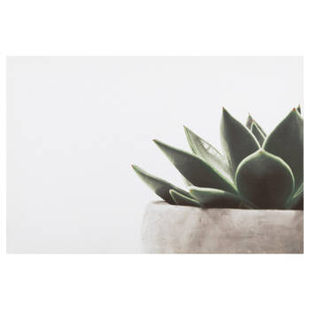 Aloe Plant Printed Canvas