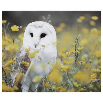 Owl In Field Printed Canvas