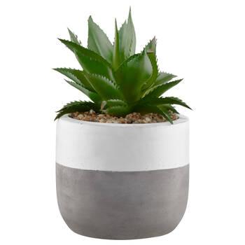 Plante grasse avec pot en ciment à deux tons