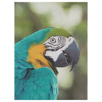 Macaw Printed Canvas
