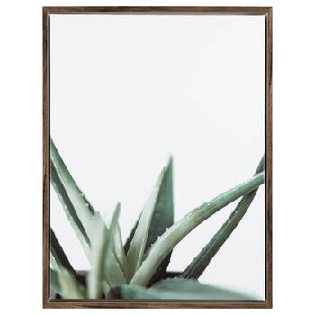 Aloe Printed Framed Art