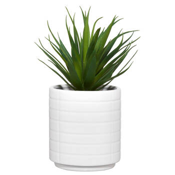 Ceramic Potted Tropical Plant