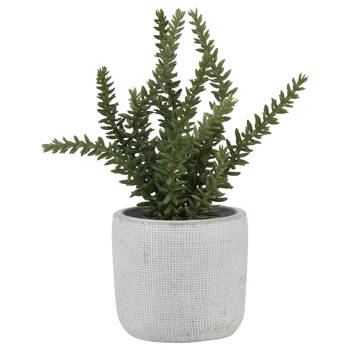 Ceramic-Potted Greenery