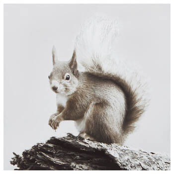 Squirrel on Branch Printed Canvas