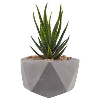 Succulent Plant in Geometric Cement Pot