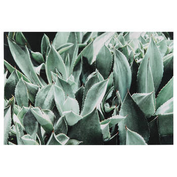 Succulent Garden Printed Canvas